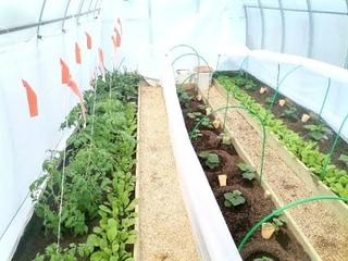 Финиш посадок в теплице с подогревом почвы. Высажены огурцы, томаты, перцы + зелень на ранний урожай