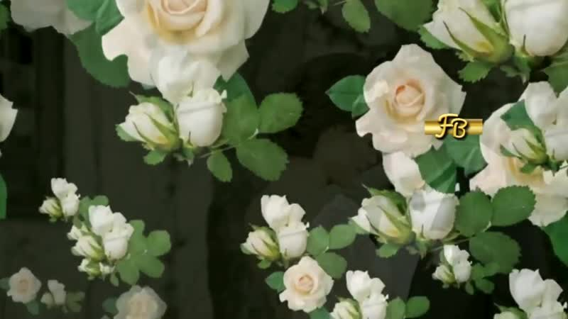 ♫♫ Cristiano Malgioglio - Mi Mandi Rose