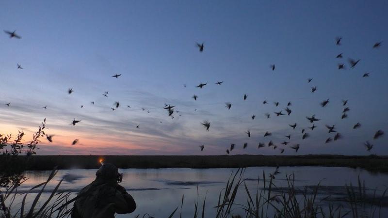 Утки налетали сотнями МР 155 заклинила Охота на степном болоте